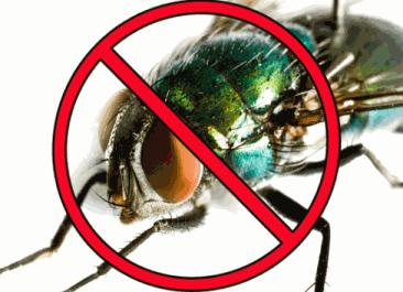 incienso para moscas